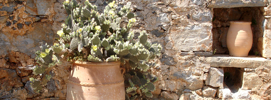 Planting in the courtyard of a traditional settlement...